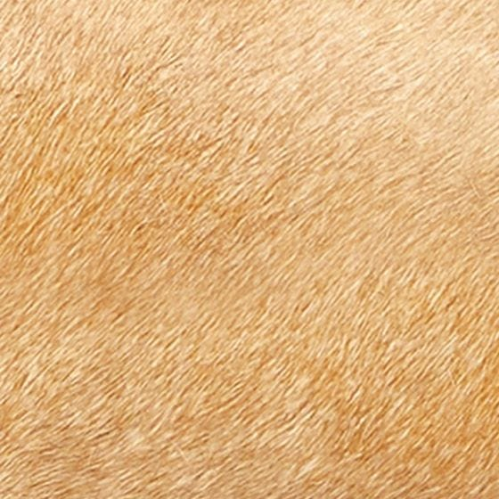 Beige Hair-on Hide Swatch